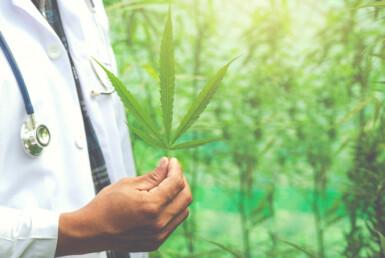Медицинская марихуана-альтернатива-фитотерапия-концепция